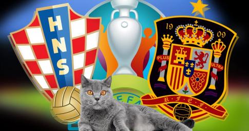 Mèo tiên tri Cass dự đoán kết quả Croatia vs Tây Ban Nha: Lộ diện kẻ bị loại